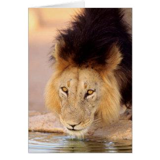 Un lion Maned noir à un point d'eau Carte De Vœux
