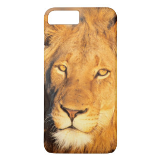 Un lion Maned rouge regardant l'appareil-photo Coque iPhone 8 Plus/7 Plus