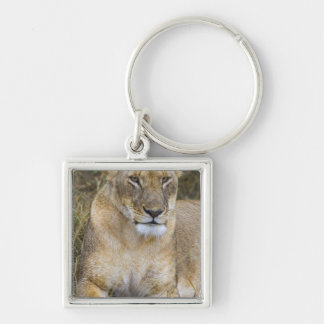 Un lion reposant la haute herbe du Maasai Porte-clé Carré Argenté