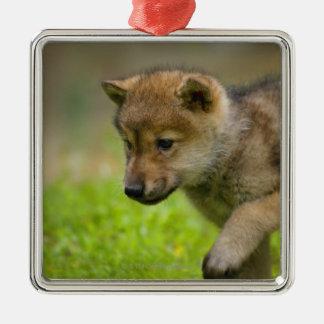 Un loup de bébé ornement carré argenté