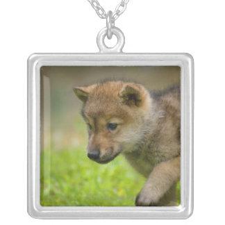 Un loup de bébé pendentif carré