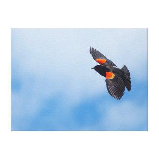 Un oiseau à ailes rouges masculin 2 toile tendue