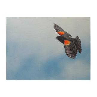 Un oiseau à ailes rouges masculin impression sur bois