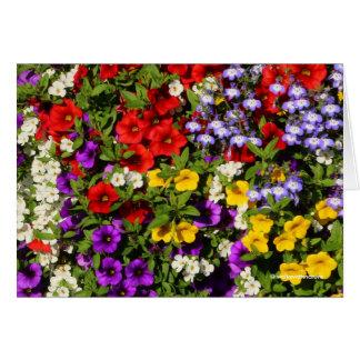 Un panier coloré des fleurs d'annuaire d'été carte de vœux