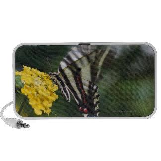 Un papillon, dans la famille des machaons ou haut-parleurs PC