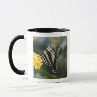 Un papillon, dans la famille des machaons ou mug