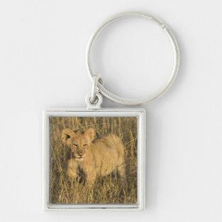 Un petit animal de lion s'étendant dans le buisson porte-clé carré argenté