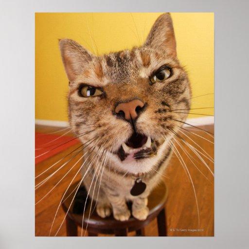 Un petit chat humoristique se repose sur un tabour affiche