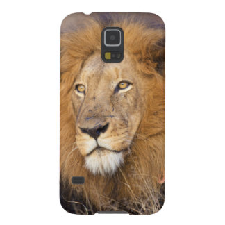 Un portrait d'un lion examinant la distance coque galaxy s5