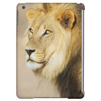 Un portrait d'un lion, parc franchissant les