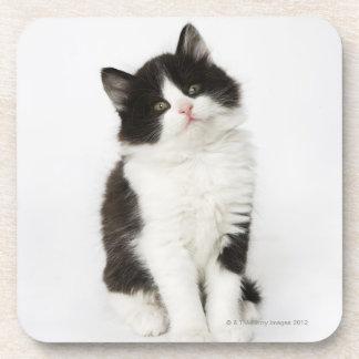 Un regard se reposant de jeune chaton dans l'appar dessous-de-verre