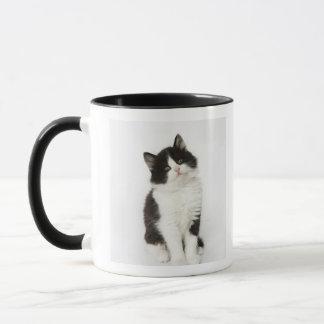 Un regard se reposant de jeune chaton dans mug