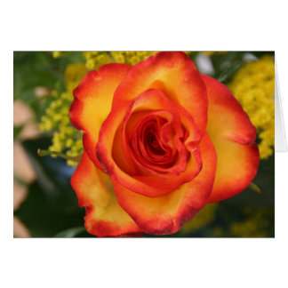 Un rose est un rose cartes