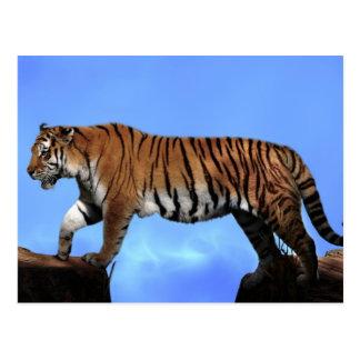 Un succès de tigres carte postale