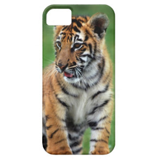Un tigre de bébé mignon coques iPhone 5