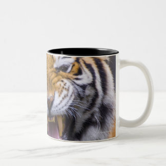 Un tigre d'hurlement, Taïwan, zoo de Taïpeh, Tasse 2 Couleurs