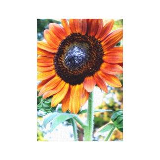 Un tournesol incroyable de beauté d automne impression sur toile