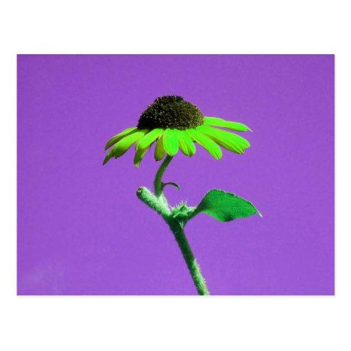 Un tournesol singulier de beauté d'automne en tant cartes postales