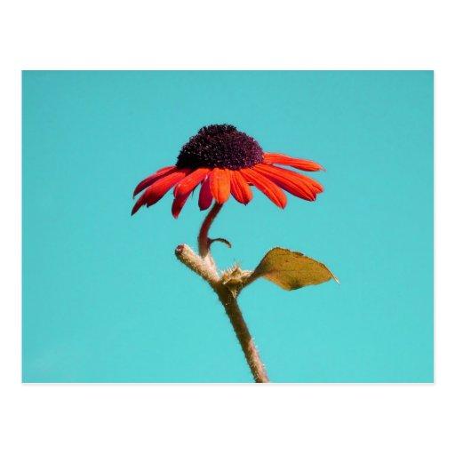 Un tournesol singulier de beauté d'automne en tant carte postale