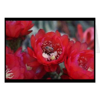 Une abeille et un cactus carte de vœux
