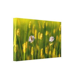 Une abeille sur les fleurs sauvages de ressort toiles