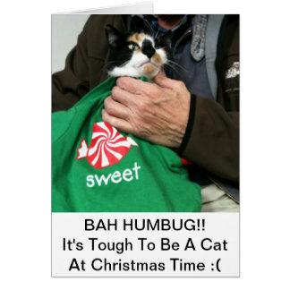 Une carte de Noël d'amoureux de les chats ! ! !