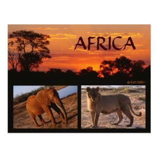 Une carte postale africaine de safari