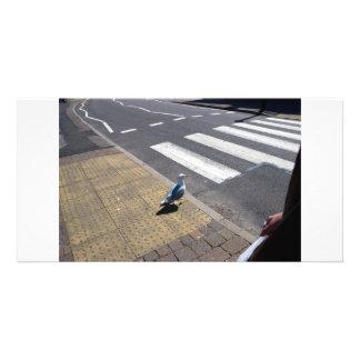 Une colombe sur le passage piéton photocarte