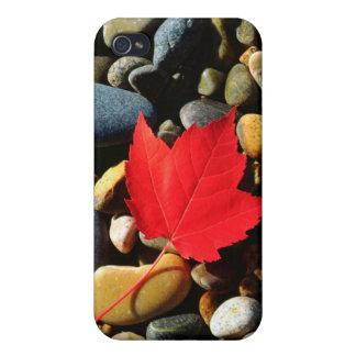 Une feuille d'érable sur un arrière - plan de coques iPhone 4