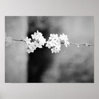 Une fleur blanche isolée poster