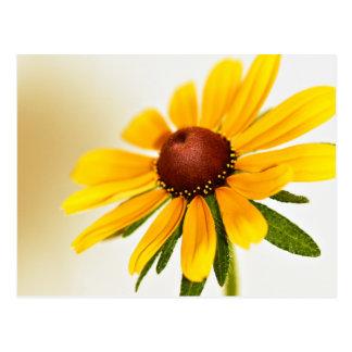 Une fleur Noir-Eyed de Susan Carte Postale