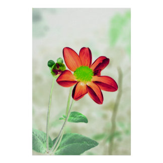 Une fleur sensible poster