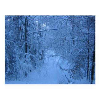Une forêt en hiver carte postale