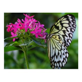 Une grâce de papillons cartes postales