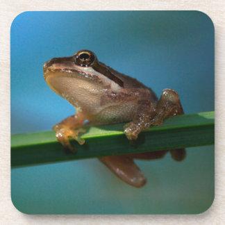Une grenouille d'arbre de bébé dessous-de-verre