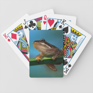 Une grenouille d'arbre de bébé jeu de poker