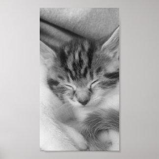 une image monochromatique de, Rusell, un chaton Poster