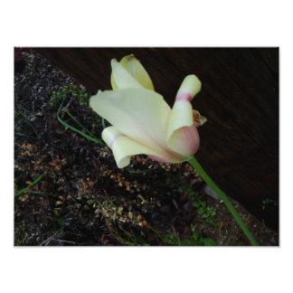 Une jolie photo de fleur