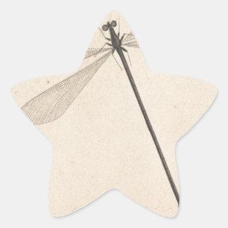 Une libellule, par Nicolaas Struyk, tôt 18ème C. Sticker Étoile