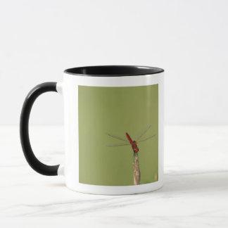 Une libellule se repose momentanément sur une mug