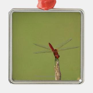 Une libellule se repose momentanément sur une ornement carré argenté