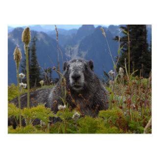 Une marmotte dans le paradis dans le pair de carte postale