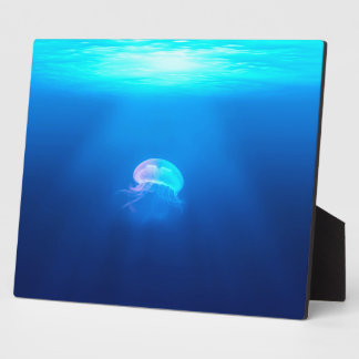 Une méduse photo sur plaque