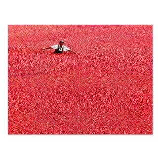 Une mer des canneberges rouges carte postale