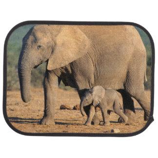 Une mère et un veau d'éléphant africain sur le tapis de sol