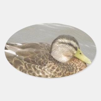 Une natation de canard sauvage sticker ovale
