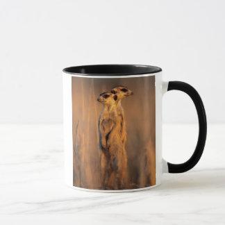 Une paire de Suricates se tenant sur une roche au Mug