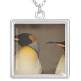 Une paire du Roi pingouins (Aptenodytes P. Pendentif Carré