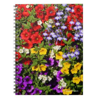 Une pastiche colorée des fleurs d'annuaire d'été carnets