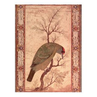 Une période de Barbet Jahangir, Mughal, 1615 Carte Postale